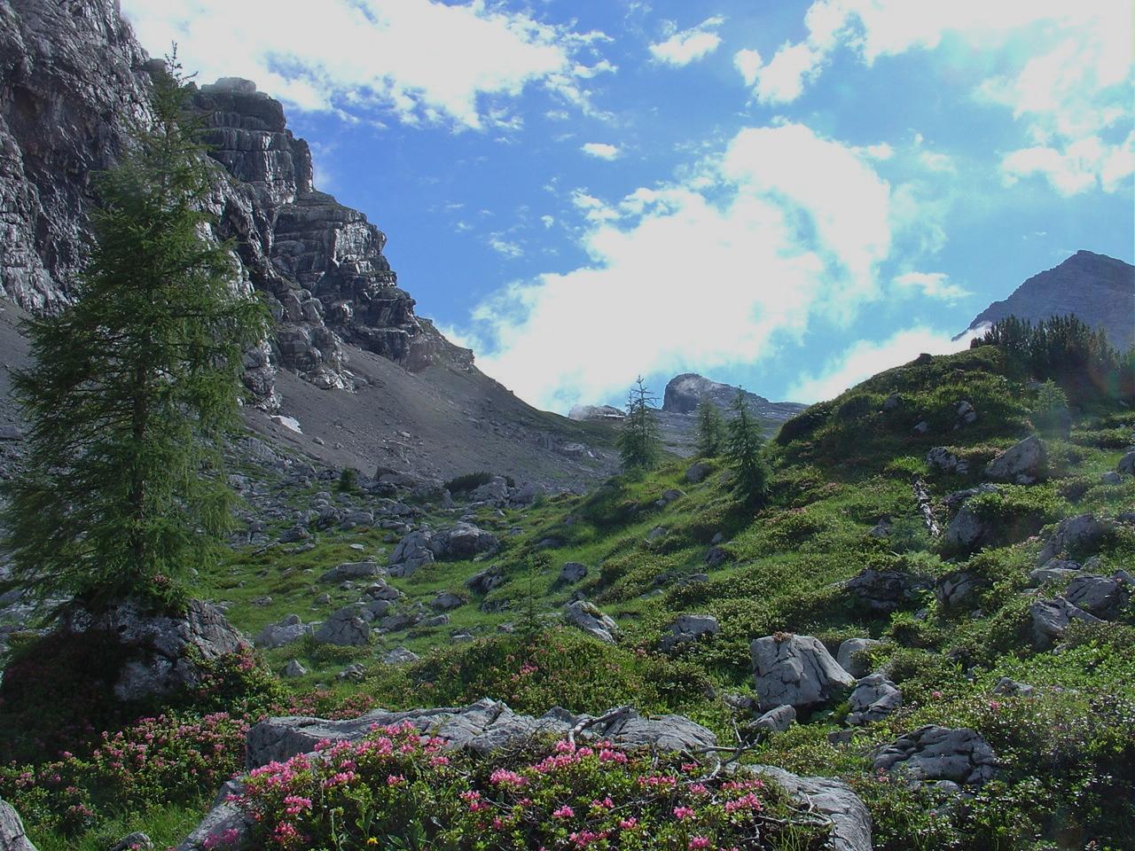 herrliche Fauna unterhalb der Nordabbrüche des Mitterhorn, oben die Mittagsscharte und Passauer Hütte erkennbar